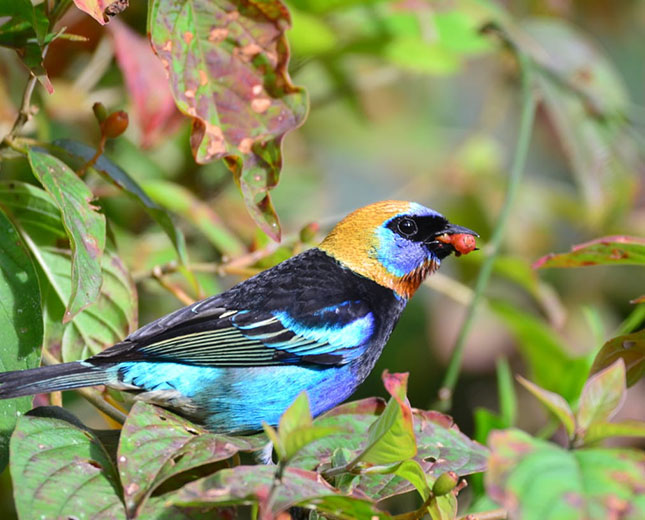 chan-chich-lodge-Experiences-OffSite-Birding
