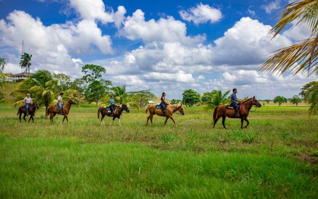 chan-chich-lodge-belize-horses